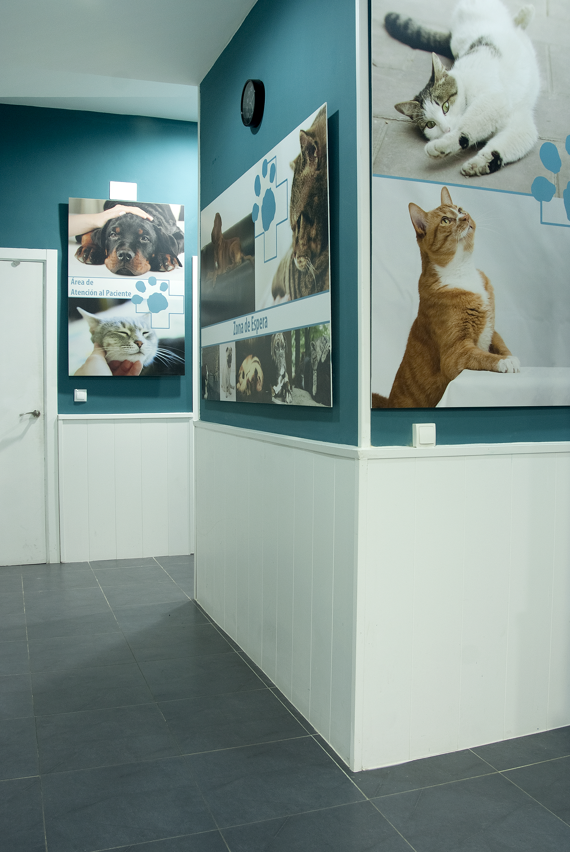 Urgencias veterinarias Madrid